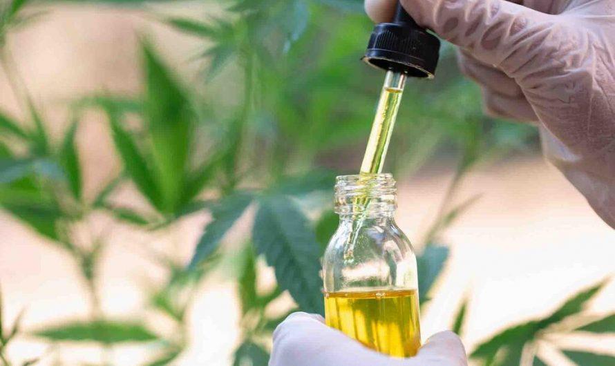 Quelles sont les différences entre l'huile de chanvre et l'huile de CBD